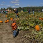 Toddler Talk Thursday: What are you looking forward to this fall?