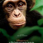 Disney News: See Chimpanzee, Save Chimpanzees!