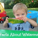 Watermelon Facts for National Watermelon Day