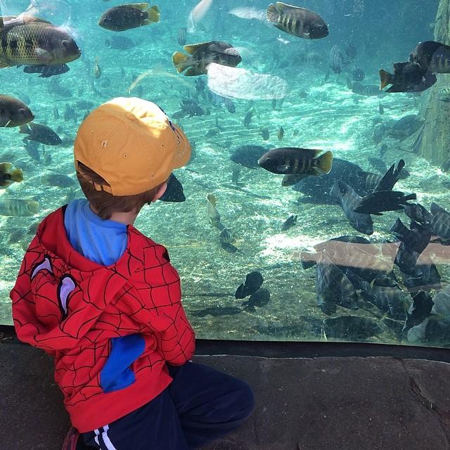 STL Zoo Fish