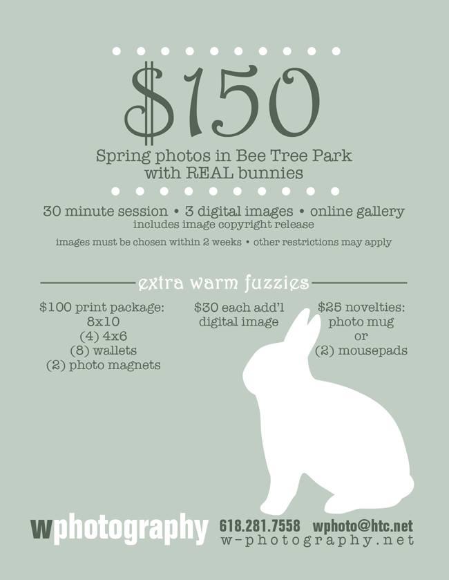 wphoto bunnies