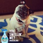 Taking the Febreze #Noseblind Test + Febreze Prize Pack Giveaway