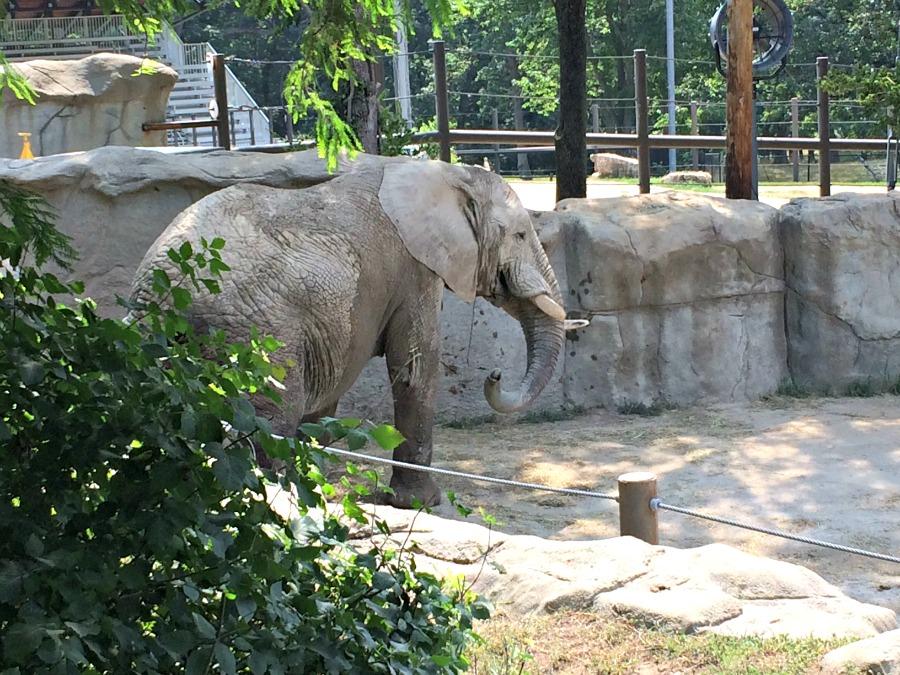 Grant's Farm Elephants