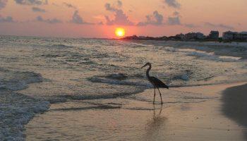 Gulf Shores Bird