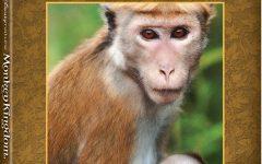 Disneynature's Monkey Kingdom on Blu-ray