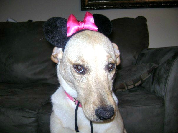 Zoey dressed up as Minnie Mouse!