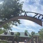 Visiting The Little Rock Zoo
