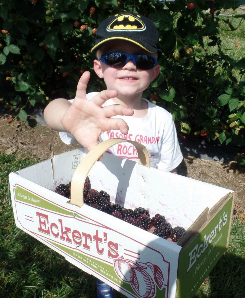 Eckert's Blackberries