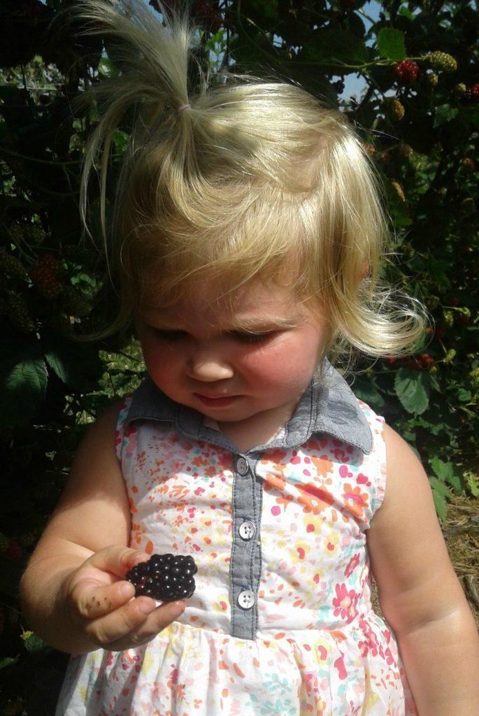 Eckert's Blackberry