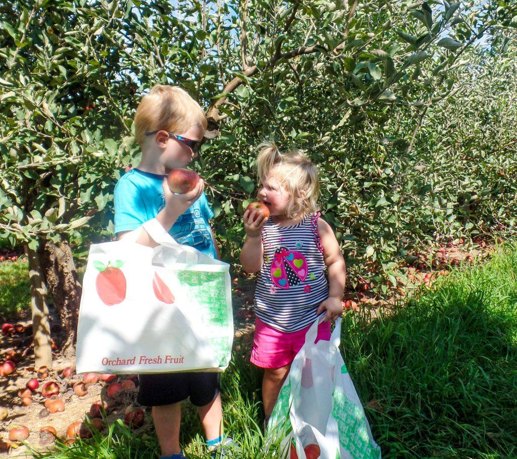 eckerts-apples