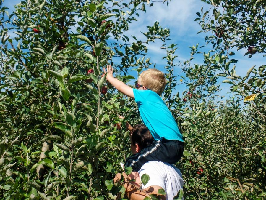 eckerts-apples-2