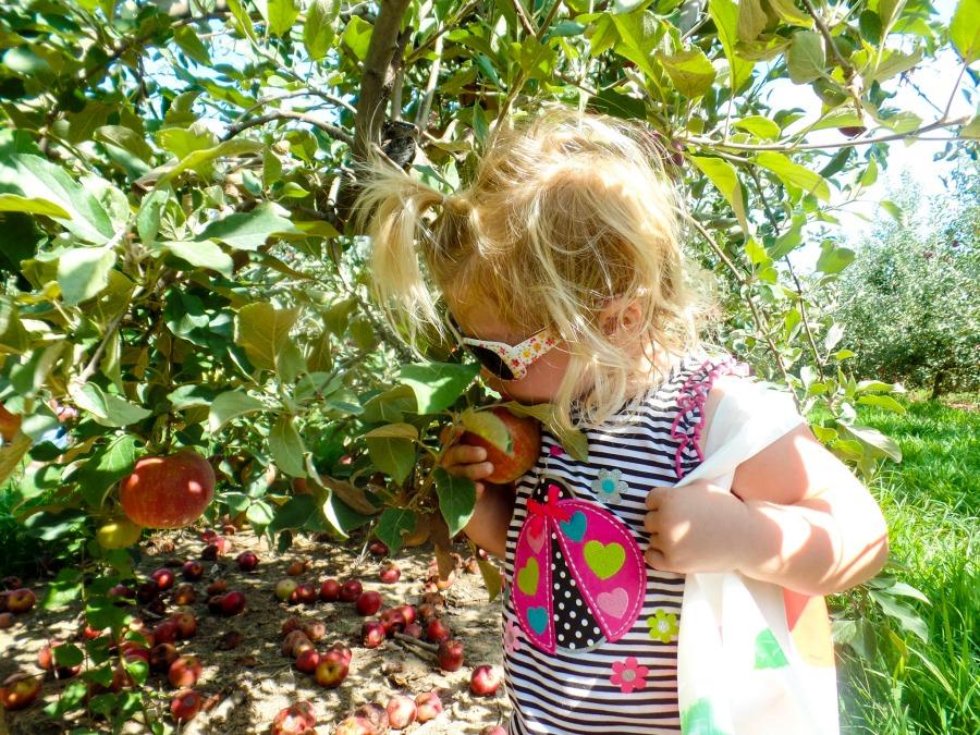 eckerts-apples-3