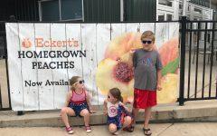 Peach Picking at Eckert's Farms