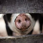 Help Farm Animals By Shopping With Your Heart