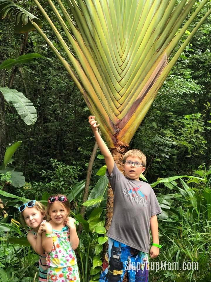Visiting Mahogany Bay With Kids