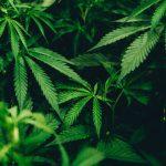 Top Colorado Defense Attorney Cautions Visitors About Denver Marijuana DUI Laws
