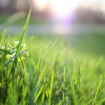 How to Manage Grass Mites