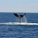 San Diego Whale Watching Season: When Is the Best Time of Year to See Whales?