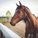 Learning About Home Remedies for Horses