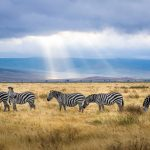 3 Tourist Attractions You Might Not Know About in Tanzania