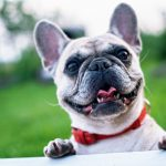 5 Cool Jobs Working Dogs Do